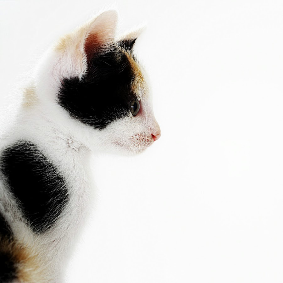 watch you by Vandy Ahmad - Animals - Cats Portraits