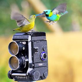 Date! by Itamar Campos - Animals Birds (  )