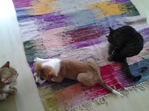 Photo: Joskus se malttaa olla kokeilematta hampailla kissoja...