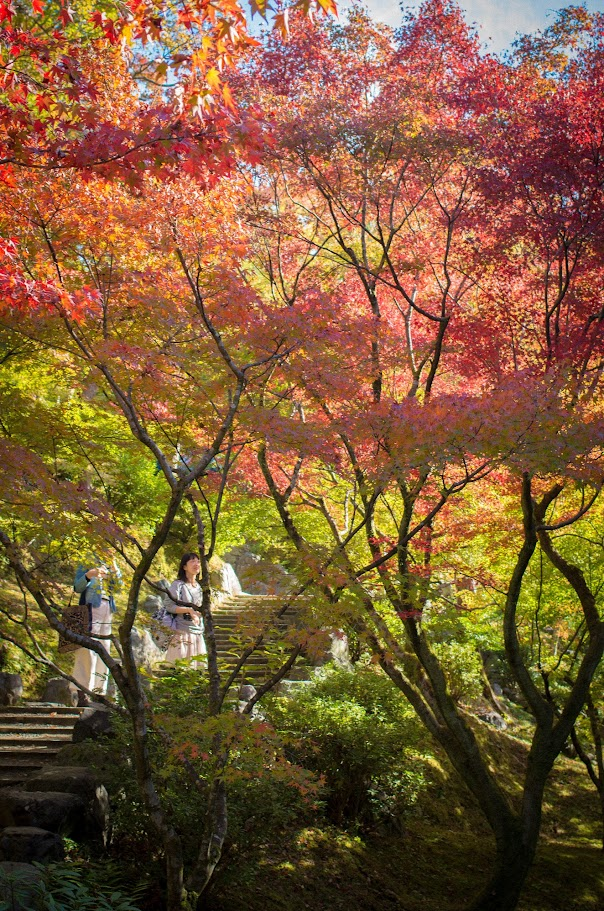 2015 京都奈良