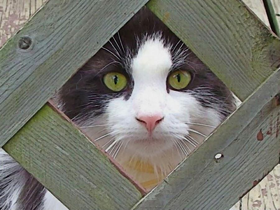 I see you by Vivian Gordon - Animals - Cats Portraits ( vigor, face, cat, candid, feline, closeup, animal )