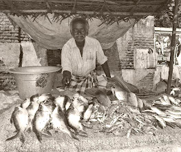 Photo: Fish Market  Tiruvannamalai Tamil Nadu