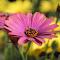 Fleur de Palette.JPG