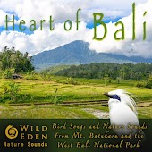 Heart of Bali - Bird Songs and Nature Sounds from Mt. Batukaru and the West Bali National Park