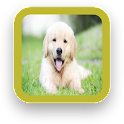Golden Retriever Puppy icon