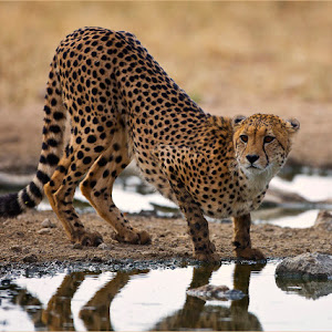 C:\Users\johan\Pictures\Kalahari 20`12 2 115 copy 2.jpg