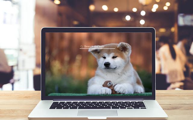 Akita HD Wallpapers Dog Theme