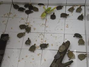Photo: Baby turtles