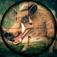 Wild Hunt - Pig Sniper Shooting