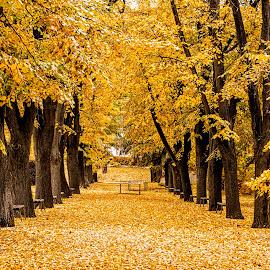 Autumn in the Park by Richard Michael Lingo - City,  Street & Park  City Parks ( path, leaves, city, vidin, park,  )