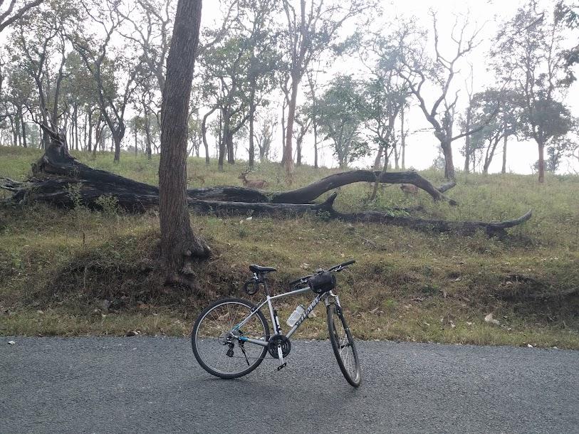 Muthumala Forest