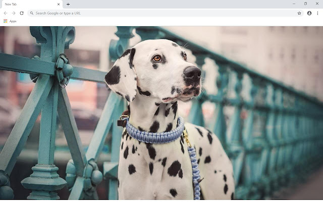 Dalmatian Wallpapers and New Tab