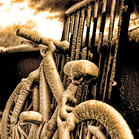 by Frodi Brinks - Transportation Bicycles