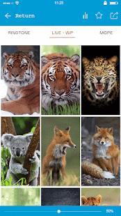 Ferocious beast Animal  Wallpaper - náhled