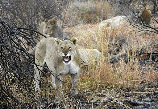 Pilanesberg National Park is home to the big five.