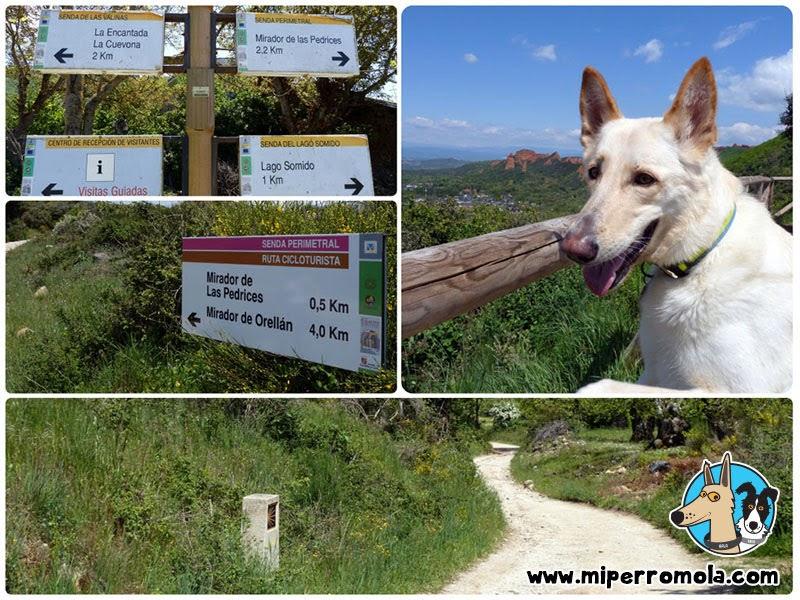 Senderismo con Perro Las Médulas de Carucedo, Can de Palleiro, Border Collie