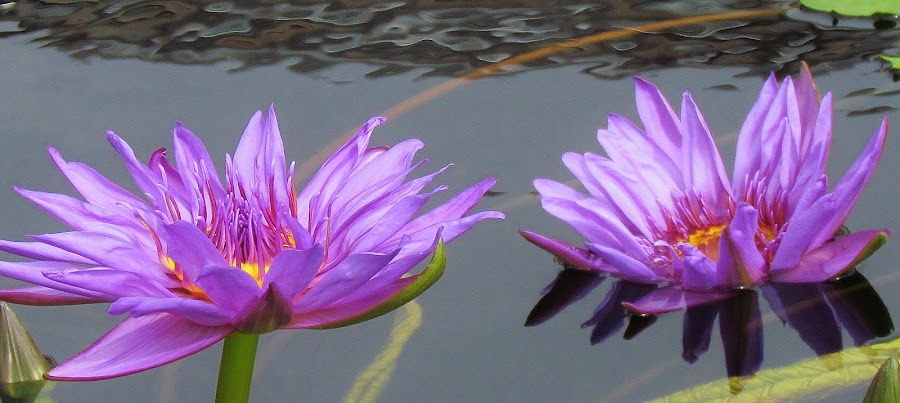 by Carol Olejnik - Nature Up Close Flowers - 2011-2013