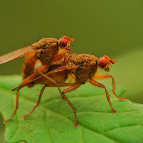 by Jade Bracke - Animals Insects & Spiders ( macro, nature, bug,  )