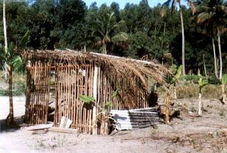 Photo: Na terra hoje escassa, práticas para garantir o alimento: galinha, banana, coco e manga, rodeados pela monocultura do eucalipto. Linharinho, dezembro/ 2004
