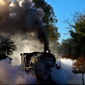 Train by Trippie Visser - Transportation Trains ( sky, train, trees, smoke, steam )