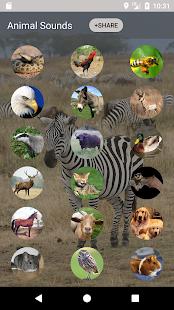 Animal sounds and Ringtone - náhled