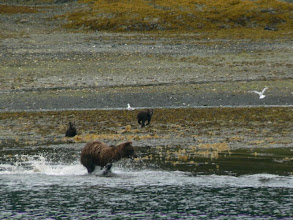 Photo: Sow Bear with Two Cubs