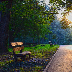Early autumn in the park by Vanja Vidaković - City,  Street & Park  City Parks ( vukovar, croatia, forest, adica, city park )