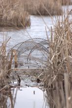 Photo: Turtle bait traps used Blanding's Turtle conservation project