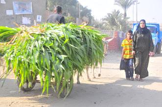 Photo: donkey pulling loaded cart