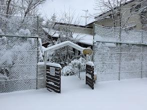 Photo: 【ドッグランのある家】の雪景色