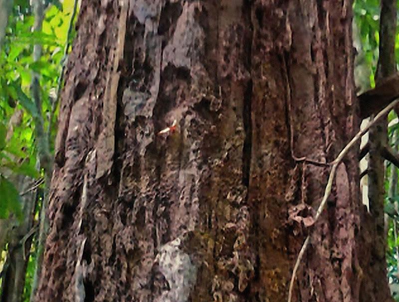 Dans la forêt vierge... JMXoSonrew3oKT-D9zPWRUAy97ZfzsgIr_b1yCpm9X--1Aumxy6PvyvbpEkV-9lgc5Rwgc3tbhxTp6eCI92XIy8_LwaS_I4E71WGSffiGim2Iin9SwPQA61Yo2K5lNnAA13KrviSyromneB9qBkiUbSG9tRZjyPdCyEstssirIpdIpi6Emc8VLXh8URTHqWDhZxycEXEQZKyb104eVWa6xj5OAUx76aGVKcFSwxdIYdjs7QOgiaVQyyAEwNx6X4AEWOw_qwkvKS4e9PztmibdThuI43dMqHDrFbxbuBQvHFsfm4xa-ZQsD0i02Py7kJDdUBORdyyRl7RBD9BbTGuaERrg0i4KPNYJWlZHqJkI3ii1B6ZRnH0-_CqyzEhns5G1Yx7xQ_B3sF00e61DcKVzigvjQ3-l2PJDZTWp9fpbd-aE2iMiuM8xiBdbjMpT_WIGwN5mkXOtYsG2BQgyTzUdIBbBWszxs-5qpcKzIYxl1eR2LHaGln2S5g39jQpesfDEtdtlhZJzV-oDh6CODGtdMiALOkZ7FizB5KdLUuPixOx0xQHPDDARlnMG-dCN-ZHgDI9i6-9gA-HYMZ9ZM2pn6Xtuty60A00fbOToJJI14VFYRLZHf5E1xEFM_y9h-XLei5_o9aXFQpM3ZOolRndGjIm8zSKbAU0hr0A0Te8Hx_LLdfzUQCedtnshHKYZi4=s800-no?authuser=0