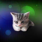 Sleepy Kitten Wallpaper Lite