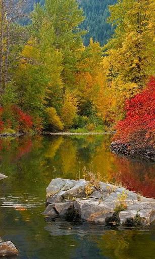 Magic forest lake