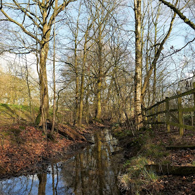 Lilford Woods by Scott Williams-Collier - Landscapes Forests