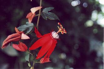 Photo: #018-Jardin botanique de Deshaies