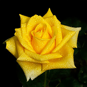 mawar e pix.jpg