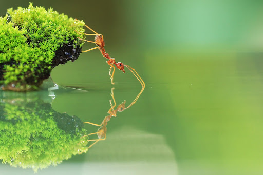 Ant Live Wallpaper
