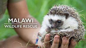 Malawi Wildlife Rescue thumbnail