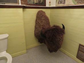 Photo: Big buffalo head in the bathroom
