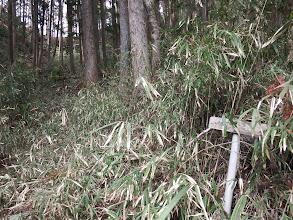 笹が茂る中に道標