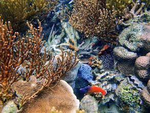 Photo: Pervagor melanocephalus (Blackheaded Filefish), Lusong Island, Coral Garden Reef, Palawan, Philippines.