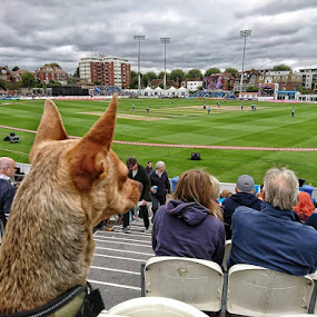 Keen supporter,,, by Jonny Wood - Instagram & Mobile Android