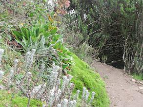 Photo: Auf dem Weg zum Rucu Pichincha