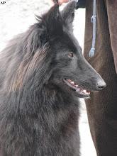 Photo: JANKA z Rubinkowskiego Pola (DREIK Polaris x DOXA z Rubinkowskiego Pola)