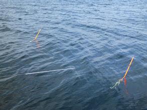 Photo: ・・・潮が悪すぎ!風もないのにウキが斜めに 進んで行くー! 上と下の潮が違うので全く食いません。