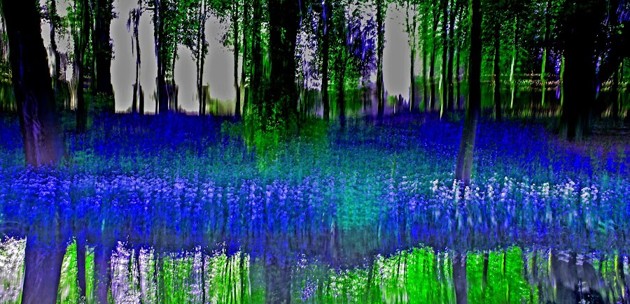 RHAPSODY IN BLUE by Russell Mander - Abstract Patterns ( bluebells  dcm blue flowers  abstract, bluebells  dcm blue flowers  abstract bluebells, bluebells  dcm blue flowers, bluebells, bluebells d c m, bluebells  dcm )