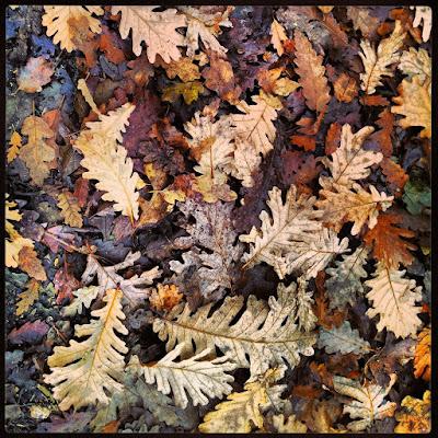 Leaves di ale86