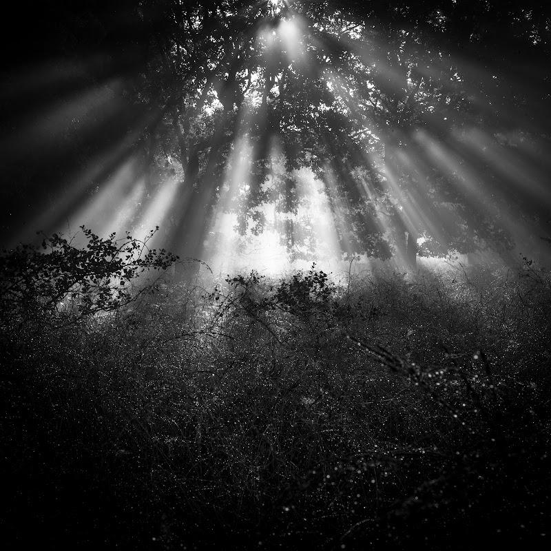 Incanto d'alba di elena_barsottelli