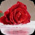 Rain Rose Live Wallpaper icon