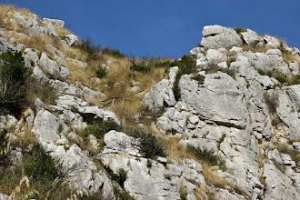 Photo: Ascesa al Pizzetiello (Sentiero delle Sirenuse)